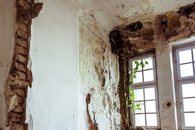 Domowe sposoby na grzyba na ścianie